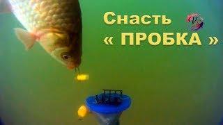 """На Озере. Подводные съемки ловли на """"Пробку"""". Рыбалка. Ловля на пробку. fishing. câu cá"""