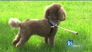 Dog Attacked and Killed by Another Dog