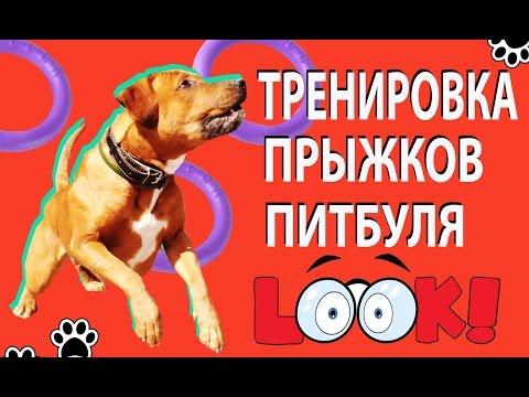 Игры человека и собаки: как играть с собакой дома в
