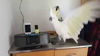 funny parrot compilation