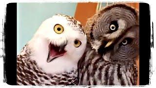 ПРИКОЛЫ С ПТИЦАМИ (приколы с животными) | FUNNY BIRDS (fun with animals) #579