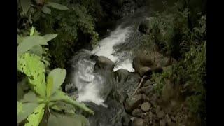 Inician labores de control ambiental en las reservas naturales de Cali