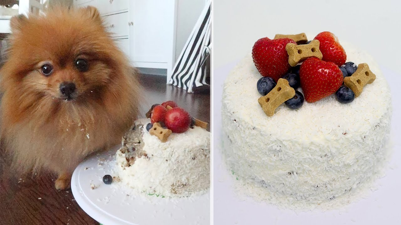 Birthday Cake For Dogs Beef Potato Coconut And Blueberry Cake