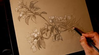 Adventures in Painting with Tim Gagnon - Learn how to draw and paint apple blossoms PT. 1