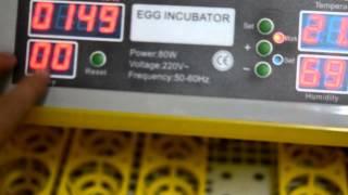 نظره على فقاسة 48 بيضه eeg incubator