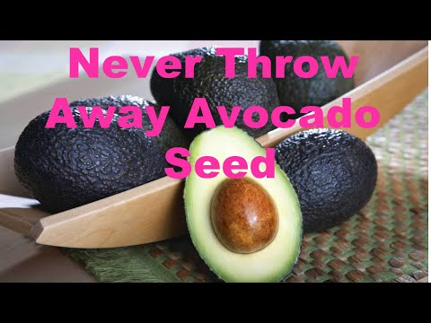 Never Throw Away Avocado Seed | Anti Aging Antioxidants Packed - YouTube