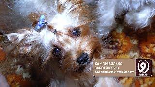 Как ухаживать за маленькими собаками? «9 телеканал» Рязань