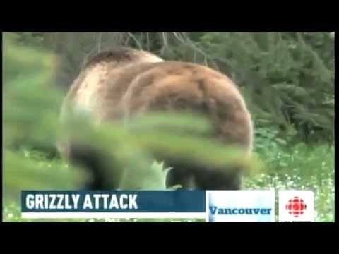 mother-grizzly-bears-charge-on-photographer
