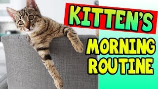 KITTEN'S MORNING ROUTINE!