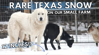 Great Pyrenees playing in the SNOW // RARE south Texas snow on our Small Farm // Farm Vlog