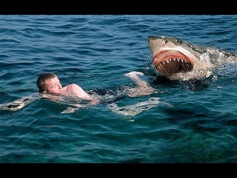 Extreme Animal Attacks On Humans Water Edition-Shark,Giant ...