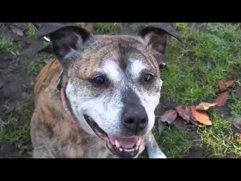 Dogs Trust Freedom Project: Freedom from fear