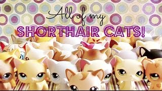All My LPS Shorthair Cats!