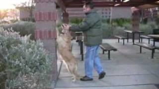 How To Teach Your Dog To Climb, Part Ii