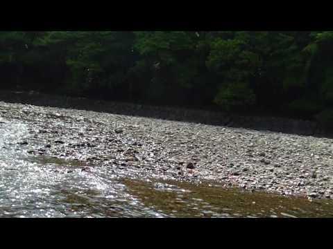 ISE shrine,murmuring of the stream, ISUZU river