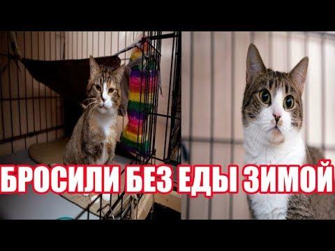 Кошку без еды зимой оставили в деревне | Кошка выживала в деревне | Грустная история кошки Долли