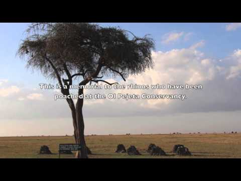 Northern White Sudan