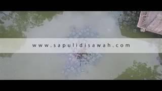 Sapulidi Sawah, Lembang, Bandung