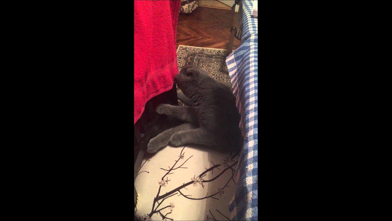 şapşal Kedi Felix Youtube