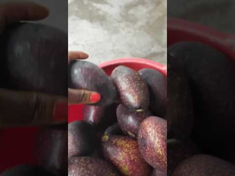 Avocado salat in Cameroon Africa