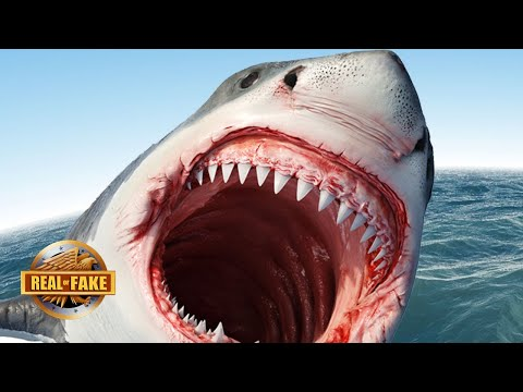 GIANT SHARK SURPRISES CAMERAMAN?