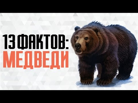 13 интересных фактов о медведях (белый, бурый, гризли и солнечный медведь)