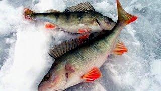Зимняя рыбалка | Ловля спортивного окуня | Рыбалка в Тамбове