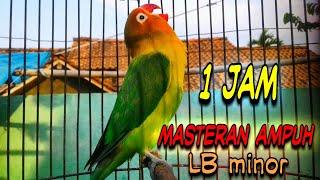Download Lagu masteran Love bird PAUD BALIBU suara minor cepat konslet mp3