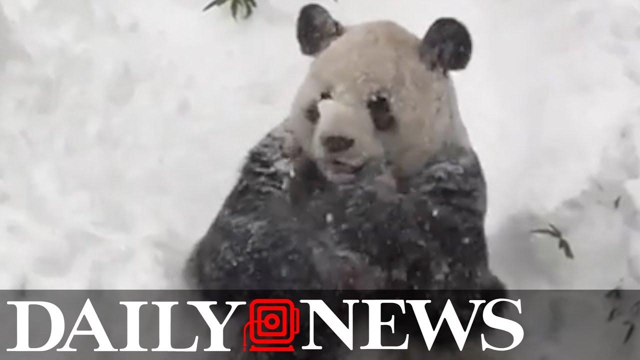 Baby animals photos baby animals ny daily news - Baby Animals Photos Baby Animals Ny Daily News 53