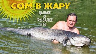 Как ловить СОМА в ЖАРУ Где ловить СОМА Дальке о рыбалке 16