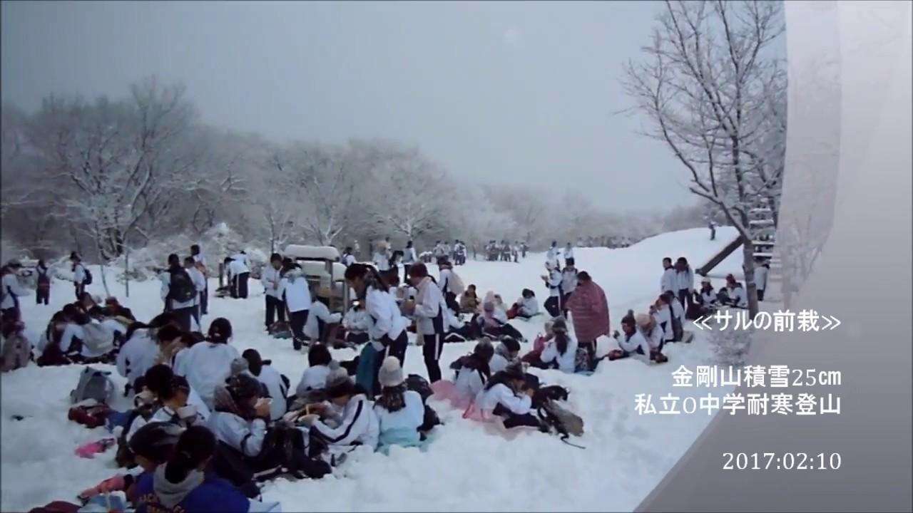 金剛 山 積雪 情報