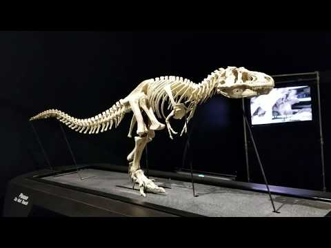 COSI Dinosaurs - new exhibit at Columbus, Ohio science center