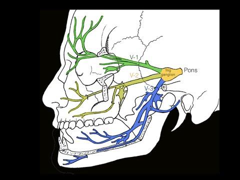 Joe Iwanaga, D.D.S., Ph.D. walks you through the anatomy surrounding theJoe Iwanaga, D.D.S., Ph.D. w.