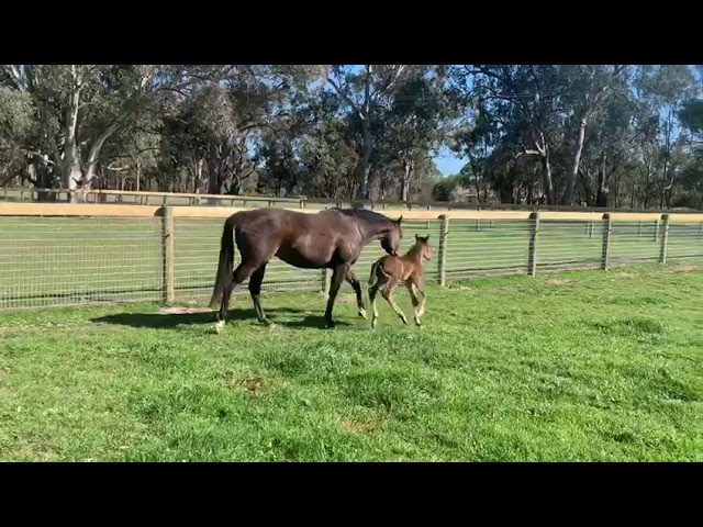 Sanity x Exceed And Excel 19' Colt_2 (20190914)