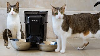 Slow And Timed Automatic Feeder For Cats And Dogs   Healthy Pet Simply Feed