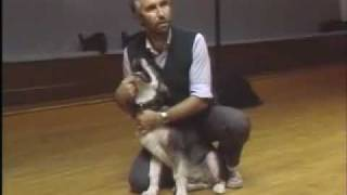 Puppy Biting - Sirius Puppy Training Classic