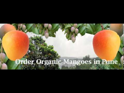Online Alphonso Mango Shops in Pune, Order Ratnagiri Hapus Mangoes in Pune -Shree Mangoes