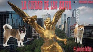 AKITAS SE APODERAN DE LA CIUDAD DE MÉXICO