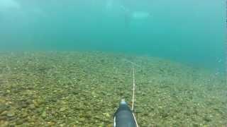 Подводная охота в Сибири. Хариус 1,4 кг.MP4