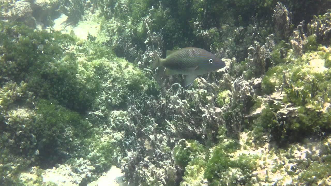 Higgs Beach Snorkel Key West 3