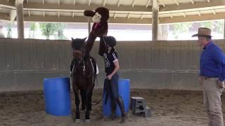 Helping Horses & People too in 2018