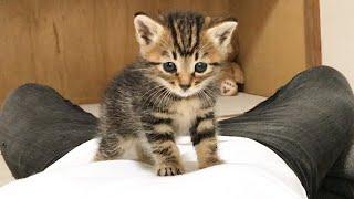お腹の上を探索する子猫