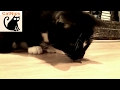 Confused Cat Investigates Unfortunate Woodlouse | Catnips