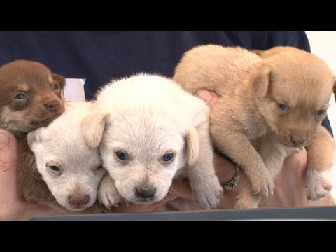 More Than 90 Animals Rescued from Arkansas