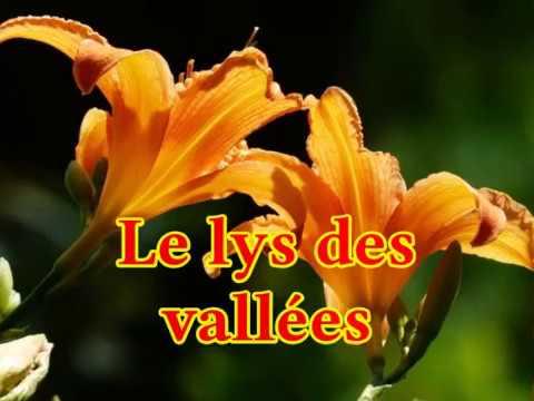 Le lys des vallées
