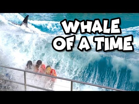 We Get Splashed by a Whale at SeaWorld Ocean Adventure. Totally TV