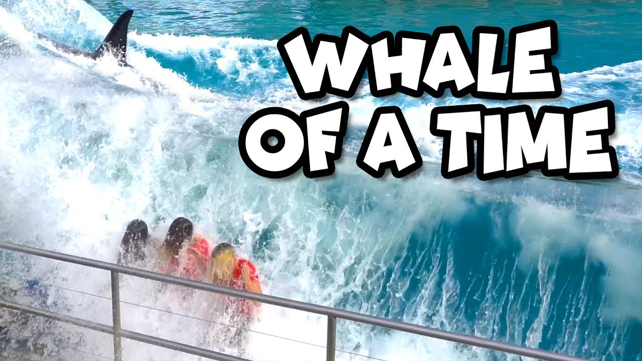 seaworld-ocean-adventure-we-get-splashed-by-a-whales-totally-tv