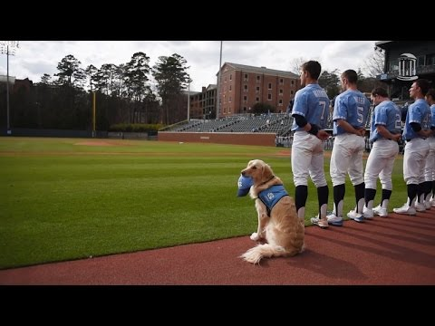 Why This 2-Year-Old Golden Retriever Joined a College Baseball Team
