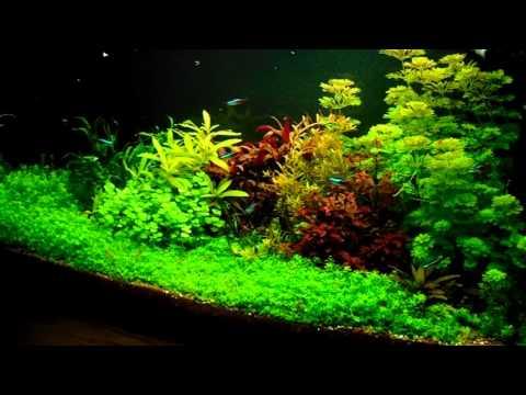 Akvarisztika kezdőknek 8  (Növényes fénycsövek)