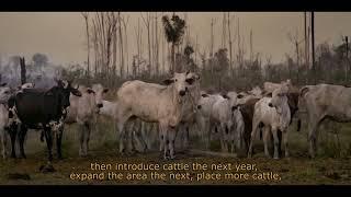 """Grazing the Amazon"" film trailer"
